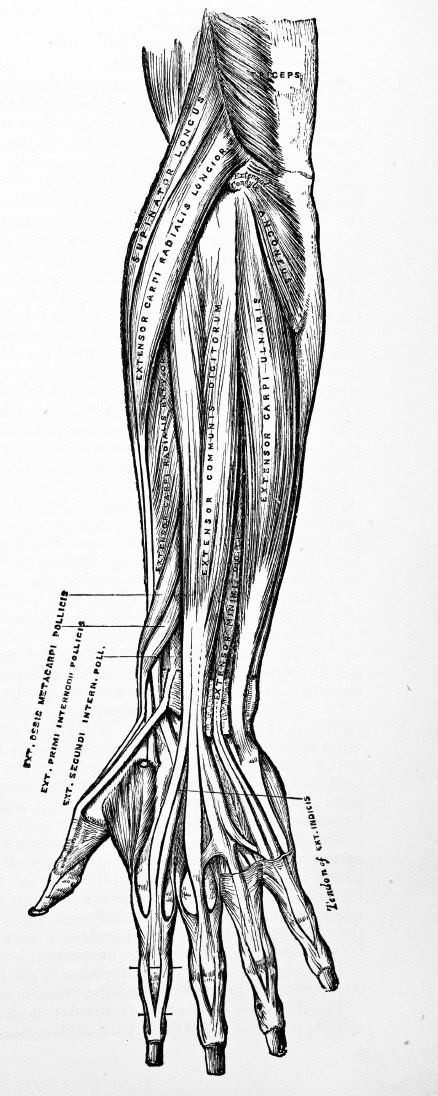 An effective forearm workout involves all of the forearm musculature. Get everything working and sore!