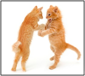 Need some workout motivation? Take up boxing with your kittens. But careful - the orange one has a mean right hook!