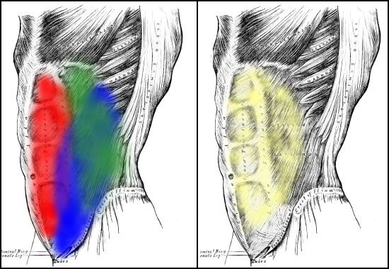 Your abdominal muscle anatomy. Red is the rectus abdominis, blue the external oblique, green the internal oblique, and yellow the transverse abdominis.