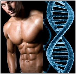 Your bodybuilding genetics have a bigger impact on your training than you might think.